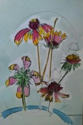 blanket flowers 1